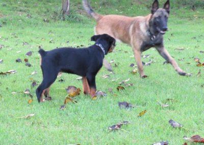 Dog Kennels Auckland