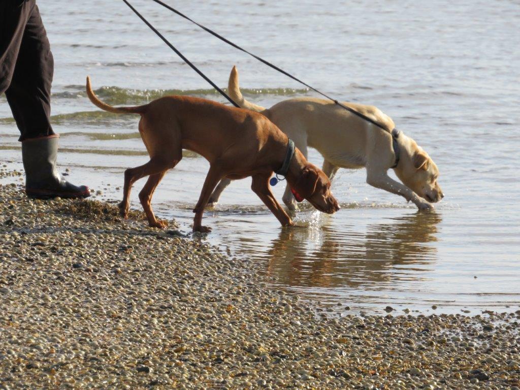 Dog Training Auckland