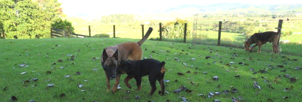 Doggy Day Care Auckland