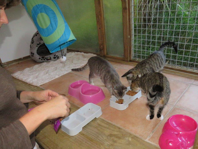 Cattery Kennels Auckland